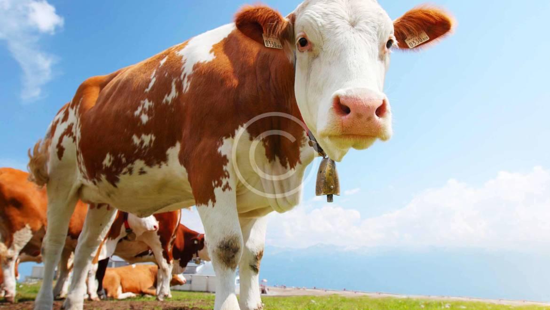 Beef Stroganoff Strips